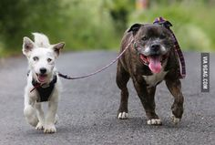 Blind Jack Russell Terrier and His Trusty Guide Dog Are Inseparable
