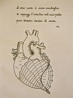 anatomical heart shell