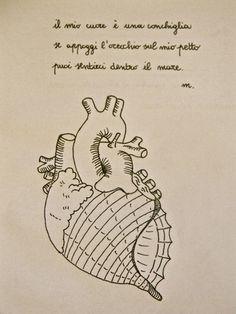 anatomical heart shell