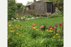 Gardens and orchards open for the Cambridge Community Gardening Open Weekend Allotments, Orchards, Cambridge, Gardens, Community, News, Plants, Outdoor Gardens, Plant