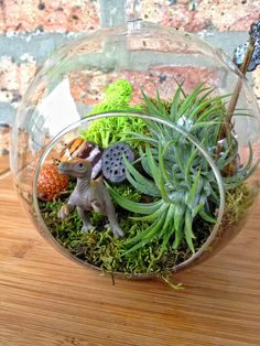 Childrens Dinosaur & Moss Terrarium by Lush and Lovely Terrariums traditional indoor pots and planters Diy Terrarium Kit, Moss Terrarium, Garden Terrarium, Terrariums, Yoga For Kids, Diy For Kids, Dinosaur Garden, Dinosaur Land, Baby Boy Rooms