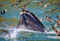 Whales at Port San Luis, Avila Beach, California by robbishopphotography. #slocounty