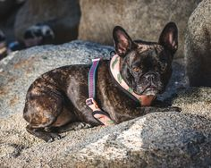 NEW ITEM! The Frenchie Reversible Harness - Our number one selling item! The Frenchie Reversible Harness is interchangeable between two fun, fashionable printed sides, giving you two harnesses in one!