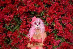 pink, la muerta, bugenvilea