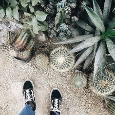 Hanging with our plant friends 🌵🌿🌱 via Vans Sneakers, Vans Shoes, Laid Back Style, My Style, Vans Outfit, Vans Girls, Skate Surf, Vans Off The Wall, Nature Animals