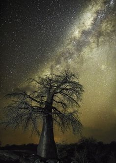 Beth Moon Returns to Photograph the World's Oldest Trees at Night - My Modern…