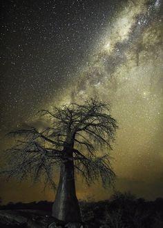Des arbres centenaires sous un ciel étoilé