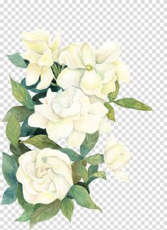 Flower If(we), flower, white flowers illustration transparent background PNG cli. Flower If(we), f White Flower Png, White Flower Background, Watercolor Flower Background, Watercolor Rose, White Flowers, Frame Floral, Transparent Flowers, Rose Illustration, Flower Graphic