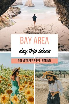 Within a couple of hours of the main Bay Area cities there are quite a few options! We're sharing 11 Bay Area Day Trip ideas to check out. Bay Area Cities, Northern California Travel, Tourism Website, Day Trips, Palm Trees, Coast, Couple, Check, Ideas