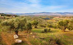 Hur smakar viner från Israel och Libanon? Georg Borgström vet.