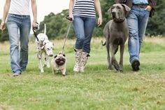 Dogs react to other dogs out of aggression or fear, or because they feel territorial. Teaching your dog to tolerate other dogs takes time and patience, but will make life much more enjoyable. If your dog is seriously aggressive, lunging and snarling, seek Dog Walking Business, Puppy Biting, Aggressive Dog, Dog Daycare, Dog Park, Dog Behavior, Dog Training Tips, Dog Grooming, Dog Friends