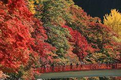 aichi taigetsukyou 秋色のカーテン