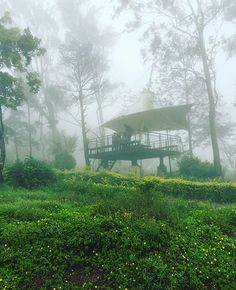 Today's top pick of @trellingbangalore .  Location:- Nandi Hills .  Picture Courtesy:- @kevinthomasofficial .  Discover new places around Bangalore  Download Trell! Use #trellingbangalore to get featured. Have you Participated in the weekend challenge yet?