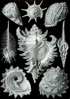 Ernst Haeckel's 'Kunstformen Der Natur' Highlights (PHOTOS)