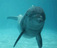 No lo inventamos nosotros un estudio probó que los delfines se comunican como humanos