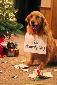 Christmas ~ Feliz Naughty Dog