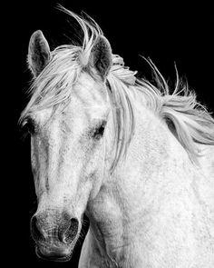 Cheval blanc photographie de la Nature par AroundTheGlobeImages