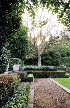 Landscape ideas ~ Layers of shrubs and trees add visual interest along this garden path