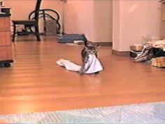 Kitten Plays Fetch With A Very Unlikely Toy!