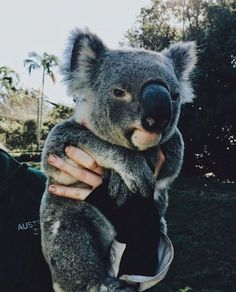 Shared by ⚜. Find images and videos about cute, adorable and animal on We Heart It - the app to get lost in what you love. how cute are the koala bears Animals And Pets, Funny Animals, Wild Animals, What Kind Of Dog, Cute Little Animals, Cute Creatures, Animals Beautiful, Beautiful Creatures, Majestic Animals