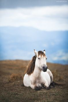 Horse on the hill, Laying down enjoying the view, but not the camera.