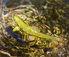 """Serenity  "" Colored pencil drawing of a Rainbow Trout by Travis J.Sylvester.  Reference photo courtesy of ""Joey Guzman"""