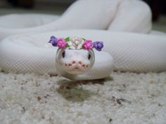 Facebook page snakes with hats