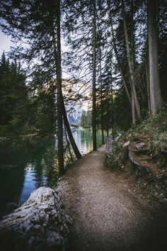 nature, forest, and tree image Beautiful World, Beautiful Places, Beautiful Pictures, Image Nature, Belle Photo, The Great Outdoors, Wonders Of The World, Enchanted, Wanderlust