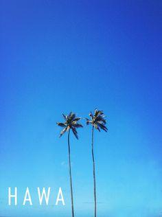 Hawaii palm trees from goldfishkiss.com