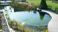 Instead of a chemical laden traditional pool, Natural Pools are a living ecosystem that cleans itself. Natural Swimming Ponds, Natural Pond, Swimming Pools, Pool Spa, Piscina Rectangular, Pool Contractors, Pond Waterfall, Tropical Pool, Pool Builders