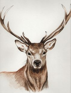 Image result for stag head painting watercolour
