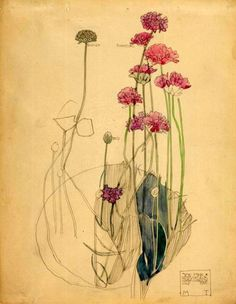 "Charles Rennie Mackintosh ""Sea Pink, Holy Island"" July 1901 (watercolour) This subtle watercolour focuses on shape and a slight tone creates nature and symbolizes form. Charles Rennie Mackintosh, Botanical Drawings, Botanical Prints, Botanical Flowers, Art Floral, Illustrations, Illustration Art, Fleurs Art Nouveau, Illustration Botanique"