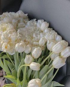 Dark Flowers, Simple Flowers, Yellow Flowers, Beautiful Flowers, White Tulips, Spring Flowers, Tulips Flowers, Exotic Flowers, White Roses