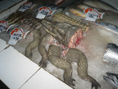 Alligator for sale in a grocery store, Weifang, China
