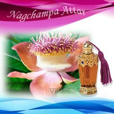 NagChampa Attar, Nag Champa Attar is derived from Nag Champa, which is one of the flowering trees of Magnoliaceae family. It has bright Orange Yellow flowers that have superior aromatic compounds. The fragrance resembles Yalang-Yalang with flowers producing an exquisite & heady fragrance. Gaining wide acceptance worldwide, its strong, fresh & floral fragrance makes it exceptional incense, which is perfect for providing deep calming meditation.