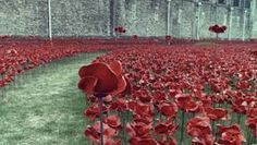 Image result for remembrance poppies