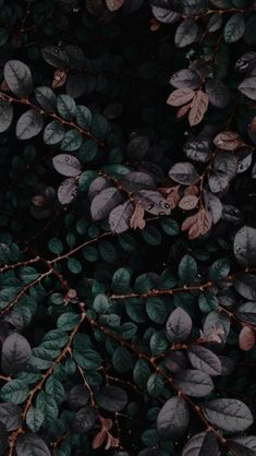dark plants #wallpaper #lockscreen