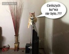 ;-) Wtf Funny, Funny Memes, Animals And Pets, Funny Animals, Can't Stop Laughing, Best Memes, Dog Cat, Lol, Poland