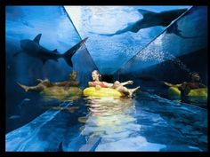 Swimming with the Sharks, Water Slide and Aquarium, Dubai