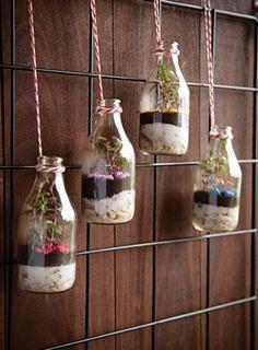 terrário em potes de vidro,linda opção para decorar sua casa, suasacada ou área de serviço:)