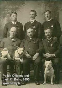 Police officers & their pit bulldogs 1896!!