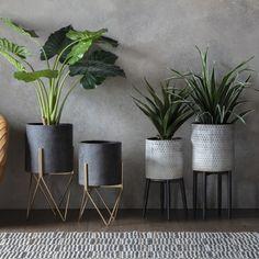 Living Room Plants, Living Room Grey, Living Room Decor, Grey And Gold Bedroom, Grey Bedroom Decor, Bedroom Furniture, Bedroom Ideas, Dark Gray Sofa, Dark Grey Rooms