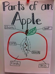 MOORE Fun In Kindergarten: More Apples and a Math Station Freebie!