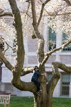 We love our cherry trees! UW Cherry Blossoms | Spring 2014