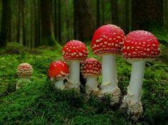 Rare red mushrooms