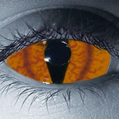 Species Custom Contact Lenses at Grimm Brothers Halloween
