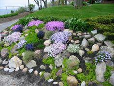 Rock Garden - Phlox