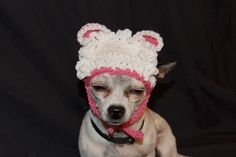 Little lamb Dog Hat