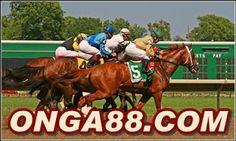 honeypickONGA88.COMhoneypick: honeypick☻☻☻ONGA88.COM☻☻☻honeypick Horses, Animals, Animales, Animaux, Animal, Animais, Horse