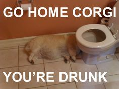 Don't end up like this corgi.